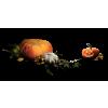 Pumpkin - Povrće -