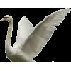 Swan - 动物 -