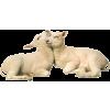 Lamb - Animals -