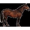 Horse - Animales -