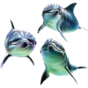 Delphin - Animals -