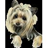 Dogs - Animali -