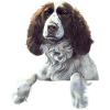 Dogs - Zwierzęta -