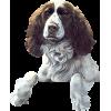 Dogs - Animals -