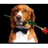 Dogs - Životinje -