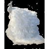 Peacock - Animals -