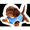 Dog - Životinje -