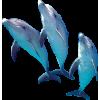 Dolphin - Животные -