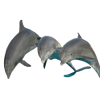 Dolphin - Animals -