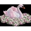 Swan - Animals -