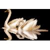Swan - Zwierzęta -