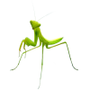 Green - Životinje -