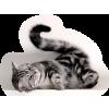 Cat - Animals -