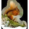 Squirrel - Animals -