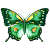Butterfly - Animali -