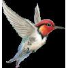 Bird - 動物 -