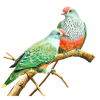 Bird - Animals -