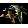 Ducks - Animales -