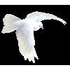 Bird - Zwierzęta -