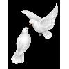 Seagull - Animals -