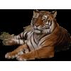 Tiger - Zwierzęta -