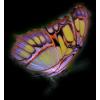 Buterfly - Animals -