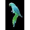 Parrot - Animali -