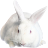 Rebbit - Animals -