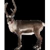 Reindeer - 动物 -
