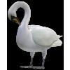 Duck - Životinje -
