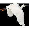 Stork - Animals -