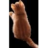Cat - 动物 -
