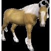 Horse - Animals -