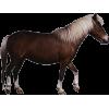Horse - Animali -