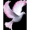 Pigeon - Animals -