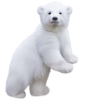 Polar Bear - Animals -