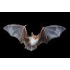 Bbat - Animals -
