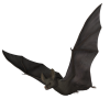 Bat - Animals -