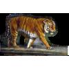 Tiger - Animali -
