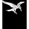 Seagull - Tiere -