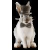 Rabbit - 动物 -