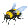 Fly - Tiere -