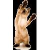 cat mačka - Animals -