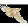 bird hawk - Animals -