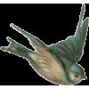Bird - Animals -