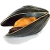 Shell - Food -