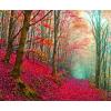 Wood - Minhas fotos -