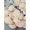 Roses - My photos -