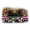 Water - Nature -