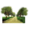Tree - Nature -